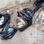 Torre Annunziata - Guardia Costiera sequestra 250 kg di prodotti ittici