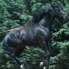 Pompei - I cavalli di Civita Giuliana probabili antenati del cavallo Neapolitano